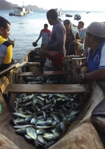 caribbean pesca